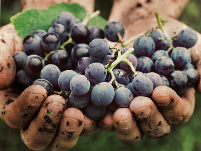 uva rossa Casa Roma