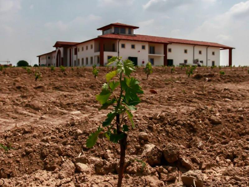 Grazie alla loro attività in vivaio, passata di generazione in generazione, la famiglia Zenato ha sviluppato una profonda conoscenza del vitigno e del territorio, in particolare della varietà Turbiana e della sua coltivazione nei diversi ambienti di cui si compone il territorio della zona del Lugana DOC