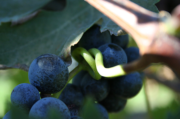 I tesori delle vigne
