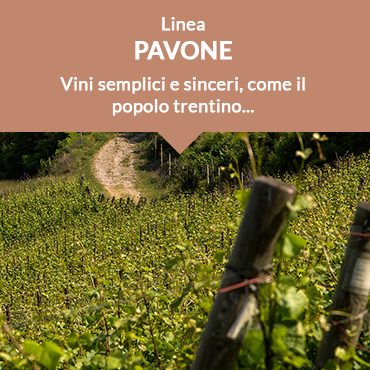 Linea Pavone