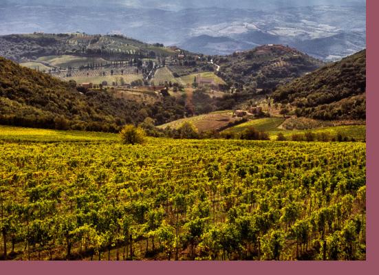 Vini di Montalcino