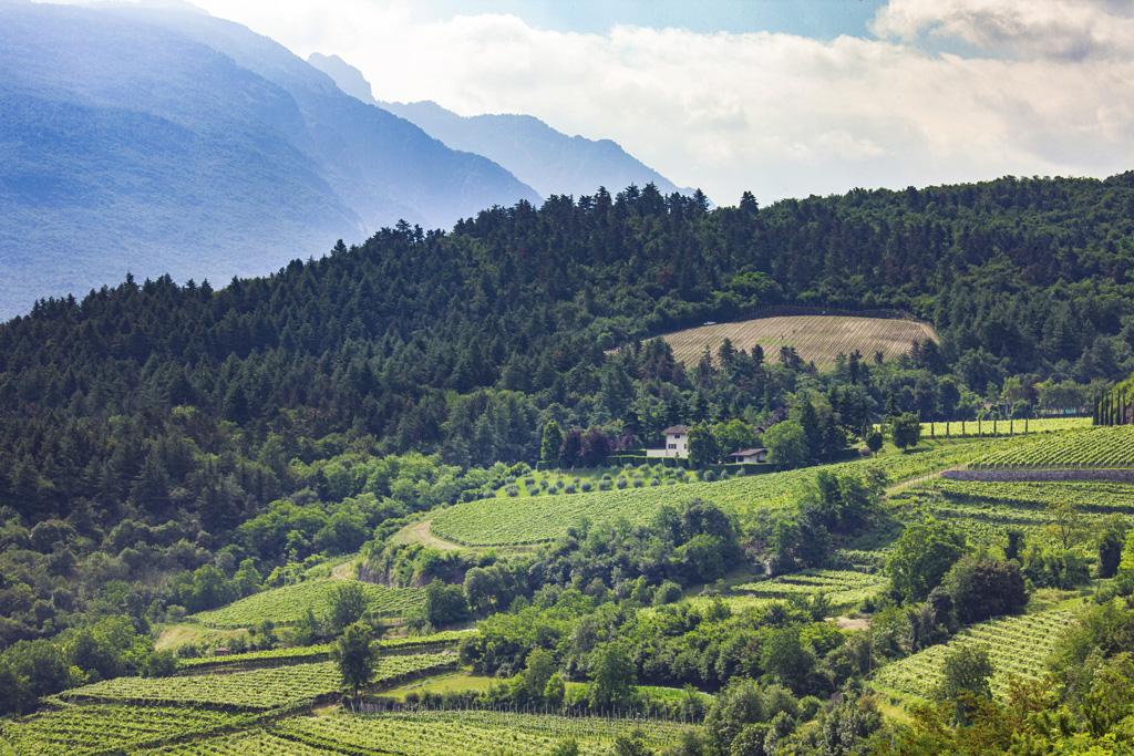 Il perfetto habitat per il vino